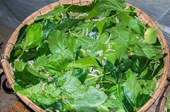 Vers à soie mangeant la feuille de mûre Photographie stock