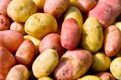 Vers aardappels Stock Foto's