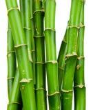 Vers bamboe Royalty-vrije Stock Fotografie