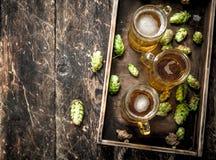 Vers bier in glazen met groene hop op een oud dienblad Stock Foto