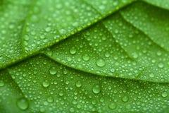 Vers blad met waterdalingen Royalty-vrije Stock Afbeelding