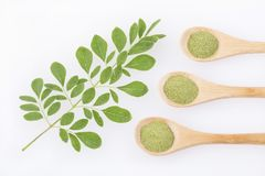 Vers bladeren en moringa poeder - oleifera Moringa Royalty-vrije Stock Fotografie