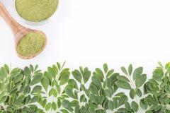 Vers bladeren en moringa poeder - oleifera Moringa Stock Fotografie