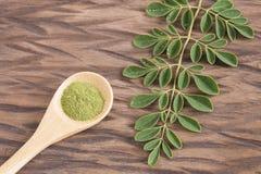 Vers bladeren en moringa poeder - oleifera Moringa Stock Foto's