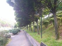 Vers bladeren en park met bomen royalty-vrije stock foto
