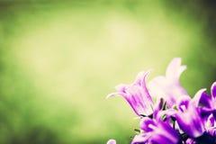 Vers bloemclose-up op gras natuurlijke achtergrond stock afbeeldingen