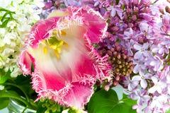 Vers boeket met roze badstoftulp, witte en purpere sering Royalty-vrije Stock Foto's