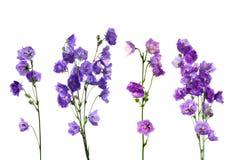 Vers boeket van blauwe en witte klokbloemen royalty-vrije stock foto