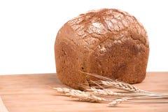 Vers Brood Stock Foto's