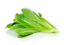 Vers Cos Lettuce Royalty-vrije Stock Foto's