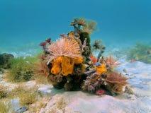 Vers de tube d'espèce marine et éponges colorés de mer Photo stock