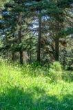 Vers de zomer boshoogtepunt van groene heldere kleuren Royalty-vrije Stock Afbeeldingen