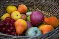 Vers de zomer sappig fruit De kleurrijke huisoogst van appelen, peren en druiven in een rieten mand maakte van wijnstok Royalty-vrije Stock Foto's