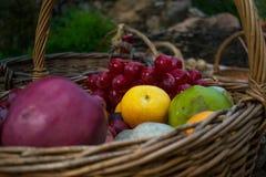 Vers de zomer sappig fruit De kleurrijke huisoogst van appelen, peren en druiven in een rieten mand maakte van wijnstok Royalty-vrije Stock Afbeelding