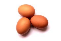 Vers ei op witte achtergrond het ei isoleted stock afbeeldingen