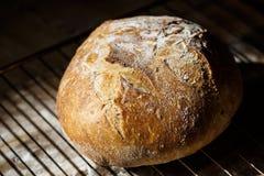 Vers eigengemaakt die brood van zuurdesem wordt gemaakt die op een draadrek rusten Artisanaal brood met gouden knapperige korst royalty-vrije stock fotografie