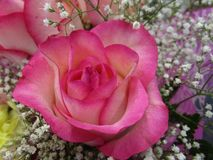 Vers en aantrekkelijk nam boeketbloemen bij de bloemist toe royalty-vrije stock afbeelding