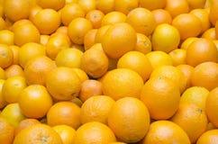 Vers en sappige sinaasappelen Stock Foto