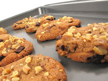 Vers-gebakken koekjes Stock Foto