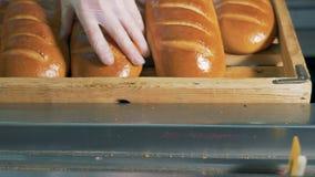 Vers gebakken wit die brood manueel voor machineverpakking wordt leeggemaakt stock video
