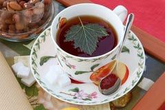 Vers gebrouwen zwarte thee met besblad in een porseleinschotel Stock Afbeelding
