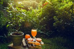 Vers gedrukt jus d'orange in tuin Glas van vers jus d'orange en een oranje boom royalty-vrije stock afbeeldingen