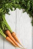 Vers gekweekte wortelen stock foto's