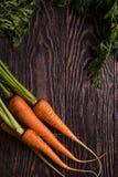 Vers gekweekte wortelen stock foto