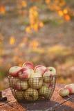 Vers geoogste appelen Royalty-vrije Stock Afbeeldingen