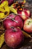 Vers geoogste gewassen rustieke appelen Royalty-vrije Stock Foto