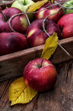 Vers geoogste gewassen rustieke appelen Royalty-vrije Stock Foto's