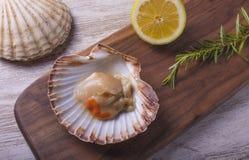 Vers geoogste overzeese kammosselen in hun shells stock fotografie