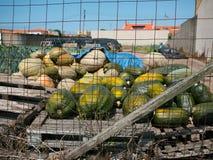 Vers geoogste pompoenen op een pallet achter een draadomheining in Portugal royalty-vrije stock fotografie