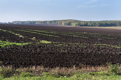 Vers geploegd gebied en de herfstbos op de achtergrond Royalty-vrije Stock Fotografie