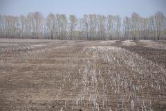 Vers geploegd gebied met de resten van de wintergewassen Landschap stock fotografie