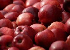 Vers geplukt rood - heerlijke appelen stock foto's