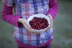 Vers geplukt van de kindholding Amerikaanse veenbessen Stock Fotografie