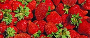 Vers geplukt van rode aardbeien, smakelijke achtergrond Royalty-vrije Stock Afbeelding