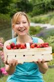 Vers geplukte aardbeien Stock Fotografie