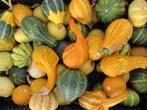 Vers geplukte courgette, voedselachtergrond Stock Afbeelding