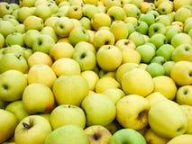 Vers geplukte Gouden - heerlijke appelen in een bak tijdens oogstseizoen royalty-vrije stock afbeeldingen
