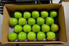 Vers geplukte Gouden - heerlijke appelen in een bak tijdens oogstseizoen stock foto's