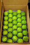 Vers geplukte Gouden - heerlijke appelen in een bak tijdens oogstseizoen royalty-vrije stock foto