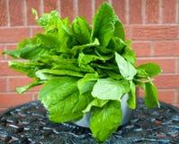 Vers geplukte groene zuringsbladeren met waterdalingen in een metaalkom royalty-vrije stock fotografie