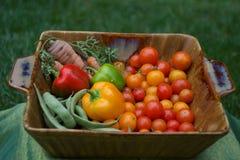 Vers geplukte groenten stock foto's