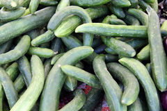 Vers geplukte komkommers Stock Fotografie