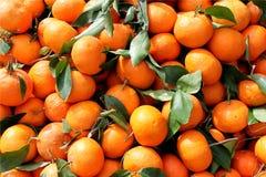 Vers geplukte mandarijnen Royalty-vrije Stock Afbeelding