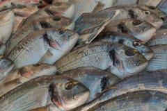 Vers gevangen brasemvissen op vertoning voor verkoop Stock Afbeelding