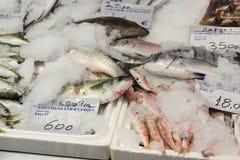 Vers Gevangen Vissen op Ijs voor Verkoop in de Griekse Vissenmarkt Stock Foto's