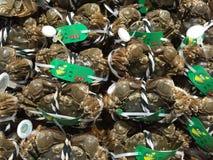 Vers Gevangen Zachte Shell Crab, zeevruchten, de Markt van Shanghai, China royalty-vrije stock afbeelding